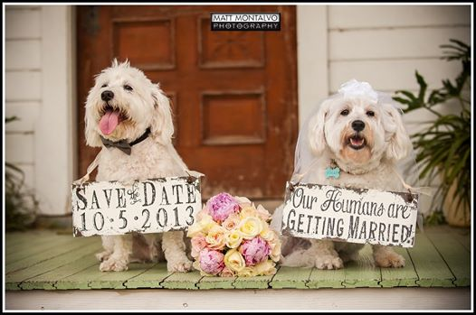 pets in weddings, dogs in weddings, furry friends in your wedding, having your pets in the wedding, crave catering, catering in austin, best catering, best event catering in austin, best event catering
